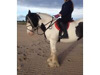 14.2hh cob for full or shared loan
