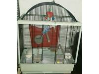 3 budgies and a cage for sale