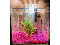 Nexus Pure 25 Aquarium