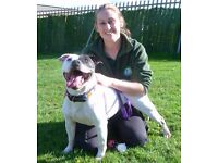 Dog Training & Behaviour, Spring Offer: Get help now!