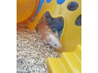 Male mouse and cage