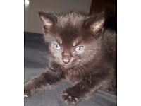 Kittens, 1 boy 1 girl