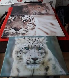 job lot of animal canvases