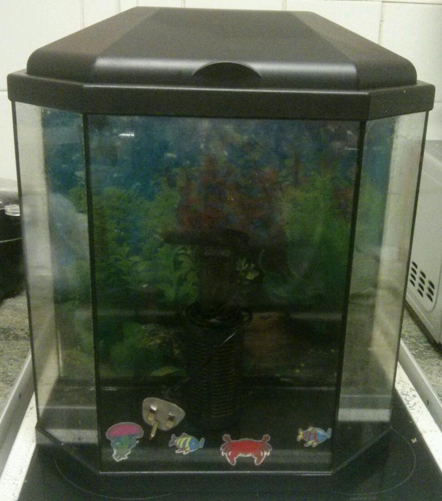 Ciano aqua 30 half hexagon fish tank in cyncoed cardiff for Hexagon fish tank