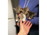 Lovely kittens for sale!