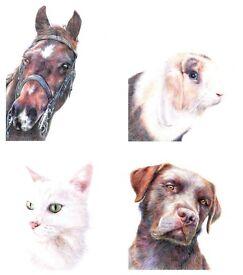 Custom Pet Portraits in Coloured Pencil