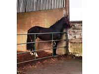17h all round horse looking for share