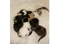 x7 Beautiful little Kittens looking for a loving forever home!!!