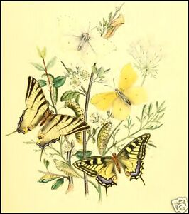 17 Old Books BRITISH BUTTERFLIES CD BRITAIN ISLES Antiquarian Book Collection