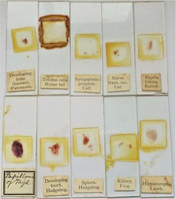 Vintage Microscope Slides Set of 10 (f)