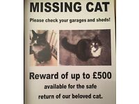 Missing cat £500 reward for the safe return of my beloved cat