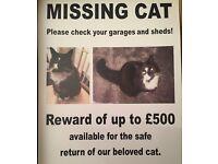 Missing cat £500 reward for the safe return of my beloved cat