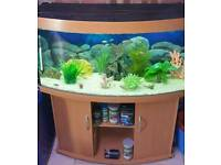 4ft Juwel bow fronted malawi fish tank