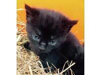 Kittens ready 8th June