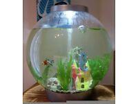 60l Biorb fish tank - stunning set up