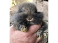 Rabbits for sale 4 available