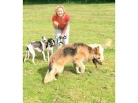 Take Me OUT! - dog walking services