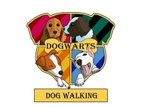 Experienced Dog Walker Dog Walking Service