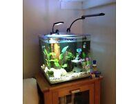 Aquaone 55L tank, just add water & fish