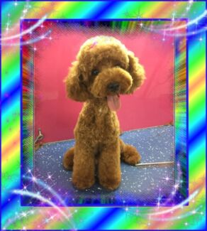 Dog grooming and Hydrobath