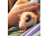 Sandycroft Rattery Waiting list ready