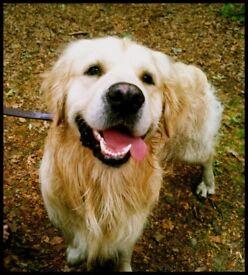 DOG WALKER, TRAINER, PET SITTING - PUTNEY/FULHAM/CHELSEA AREAS - REASONABLE & RELIABLE