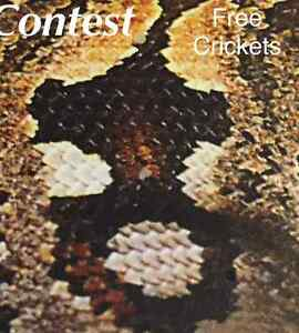 *****FREE CRICKETS*****SEE CONTEST****