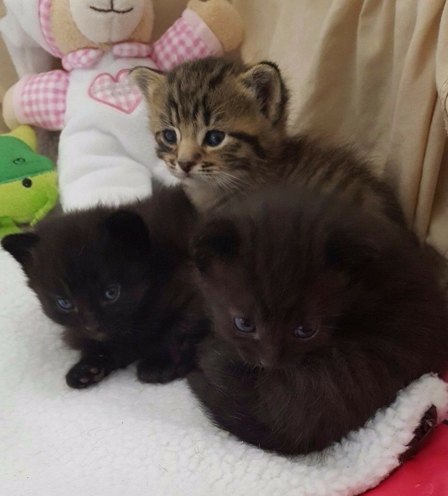 3 very cute kittens in Rathfriland County Down