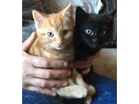two boy kittens