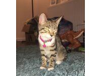 Around 3 month old kitten , ready to go