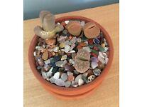 Lithops Stone Plants In Terracotta Pot