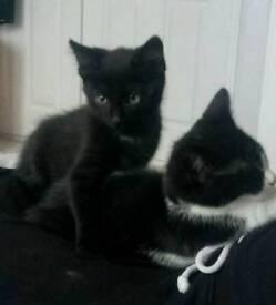 7 month female & male kittens