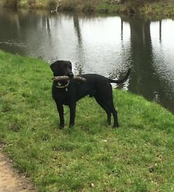 ***trusted local dogwalker available***