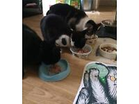 Posh Paws Cat & Small Animal Sitting Service Coventry