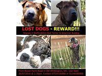LOST DOGS - CHESTERFIELD - REWARD