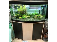 fluval 180L with external filter