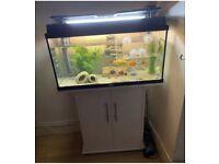 Large Aquarium with Fish