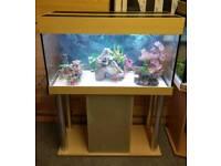 MP Eheim 200L 3ft3 Fish Tank Setup