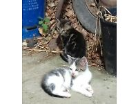2 kittens looking for new home