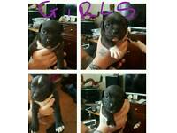 Staff puppys