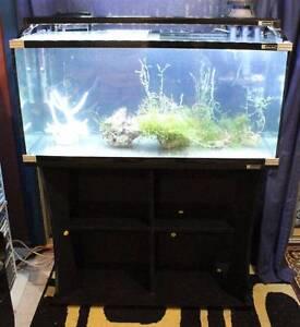 Aqua One 300L Aquarium + Aqua One Aquis 700 Filter Henley Beach Charles Sturt Area Preview
