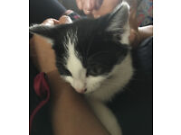 wonderful little cute kitten ready for a new home