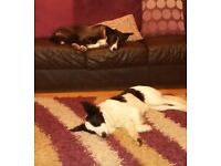 Jess & Toby need a new loving home - can you help?