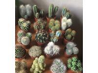 Cactus 3 for £10