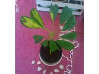 Plant for sale £3