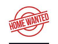 ROOM WANTED in Beeston / Lenton (Postgraduate Student at UoN)