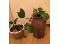 Indoor plants 🌱
