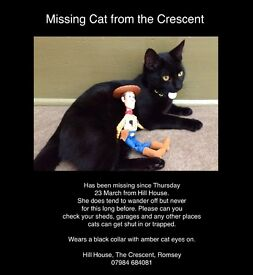 Missing Cat in Romsey, Hampshire