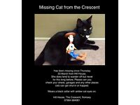 Missing black cat Romsey, Hampshire