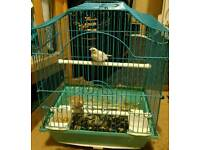 Baby finches..free cage free food